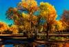 <十一·胡杨林品质空调旅游专列七日深度游>额济纳胡杨林、中蒙边境、酒泉卫星发射基地、居延海、黑水城+怪树林